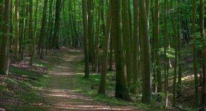 Am Salemer Moor findet man einen dichten naturnahen Wald., © Alex K. Media / HLMS GmbH