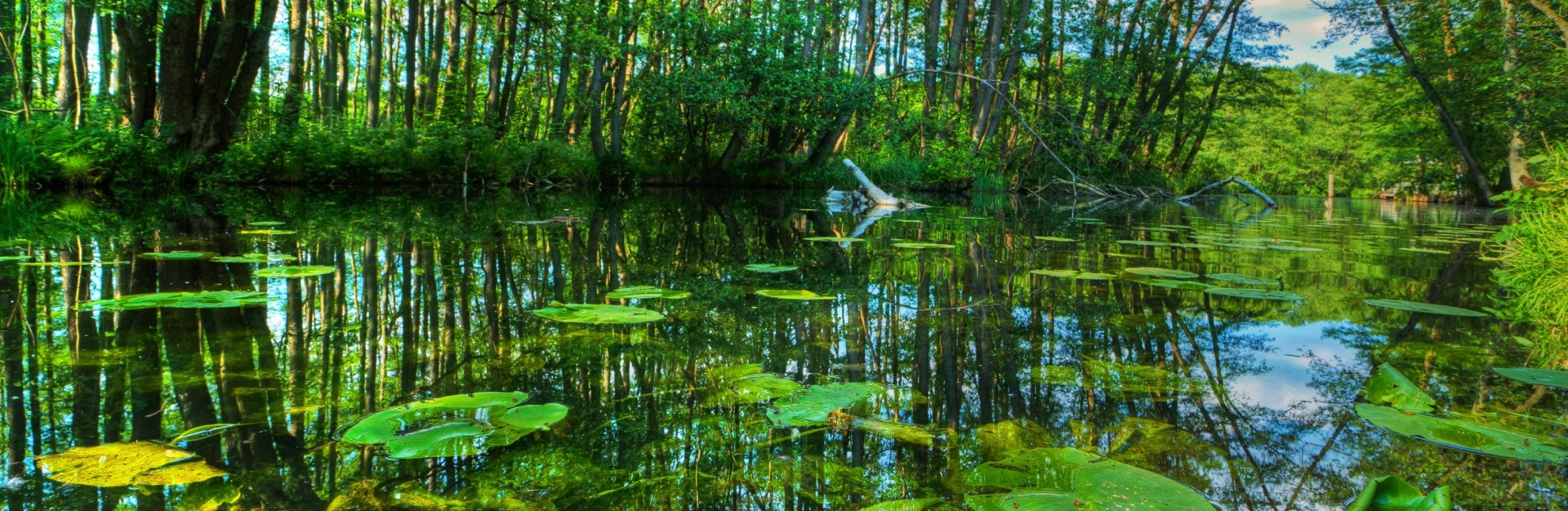 """Die Wakenitz - der """"Amazonas des Nordens"""", © Thomas Ebelt / HLMS GmbH"""