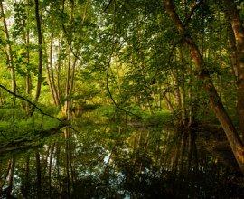 Südlich von Mölln fließt der Hellbach durch das gleichnamige Tal., © Nicole Franke / HLMS GmbH