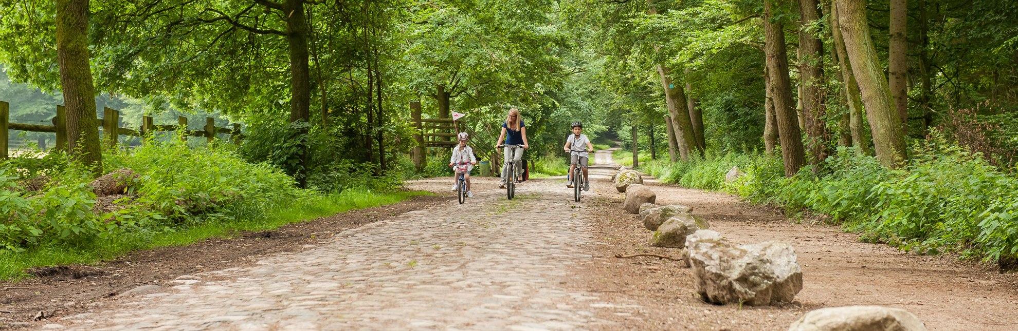 Die Bauernhofradtour verläuft bei Fredeburg am Wisentgehege vorbei durch herrlichen Mischwald., © Nicole Franke / HLMS GmbH