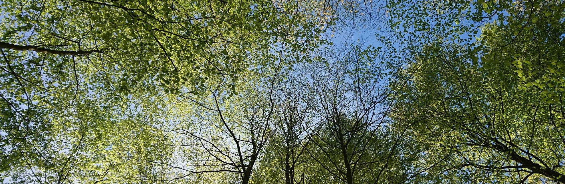 Eine ganz neue Perspektive bietet ein Blick in den Waldhimmel., © HLMS GmbH