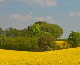 Rapsfeld im Herzogtum Lauenburg, © Thomas Ebelt/ HLMS