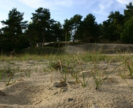 Dünenlandschaft am Wanderweg in den Besenhorster Sandbergen, © Tourist-Information Geesthacht