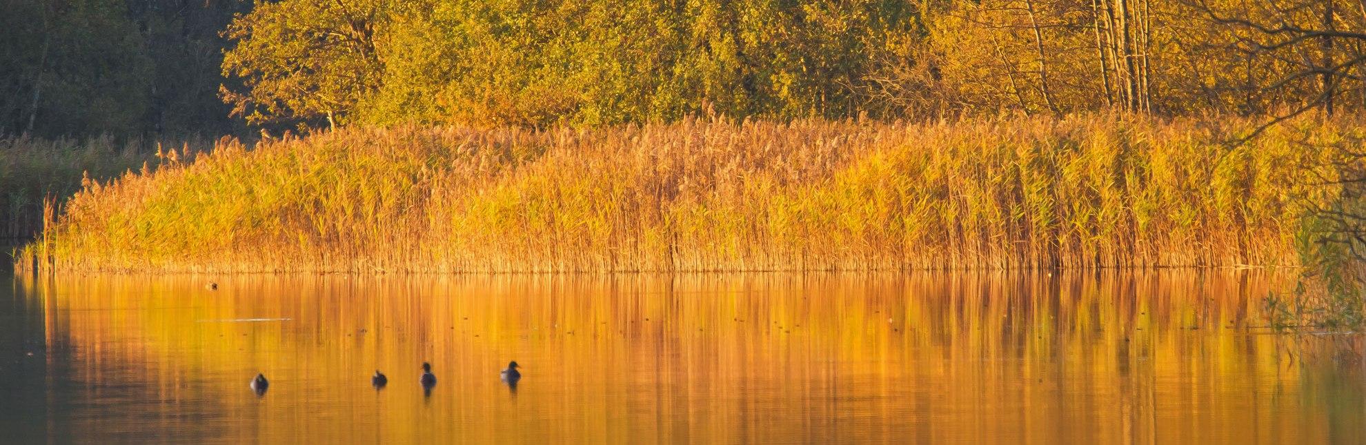 Goldener Herbst am Schaalsee im Herzogtum Lauenburg., © Thomas Ebelt / HLMS GmbH