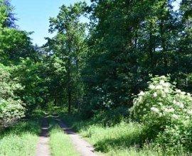 Der Wanderweg führt auf etwa fünf Kilometern durch den Wald auf dem Spakenberg am Rande der Elbestadt Geesthacht., © Bettina Knoop / Tourist-Information Geesthacht