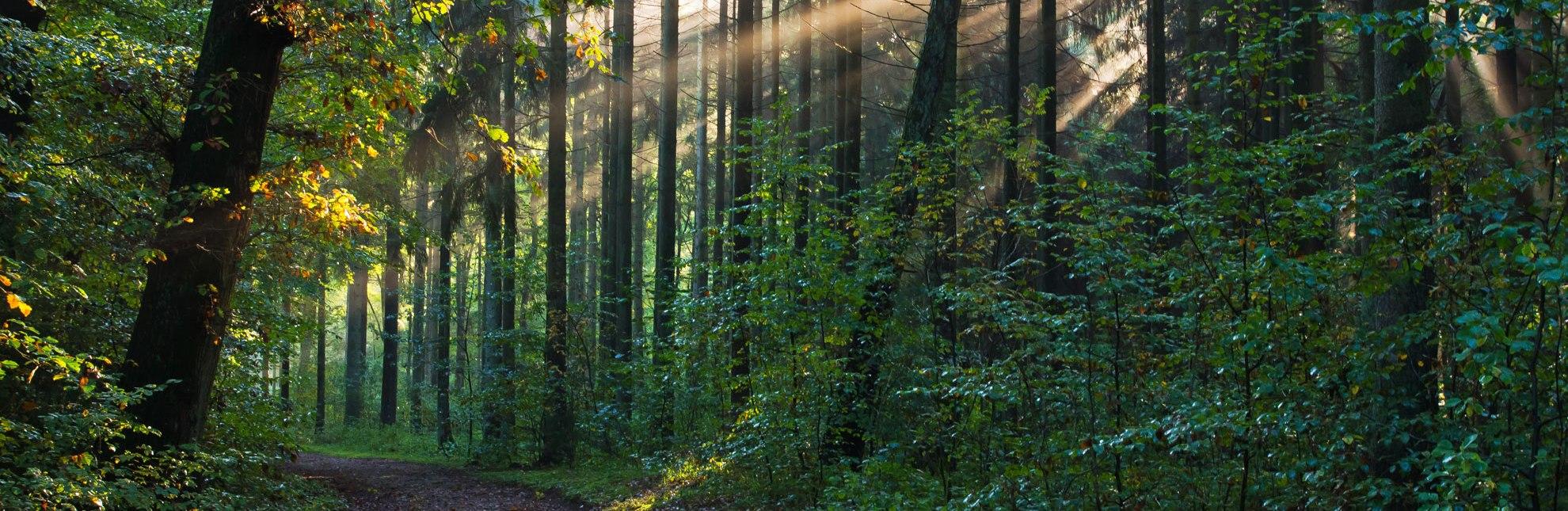 Im Sachsenwald lässt es sich herrlich auf weichen Pfaden wandern., © Thomas Ebelt / HLMS GmbH