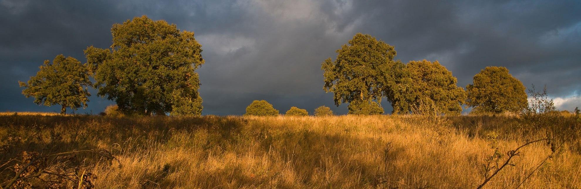 Zwischen Licht und Wolken im Pirschbachtal bei Mölln., © Thomas Ebelt / HLMS GmbH