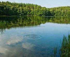 Ganz in der Nähe von Mölln liegt versteckt im Wald der schöne Pinnsee., © Nicole Franke / HLMS GmbH