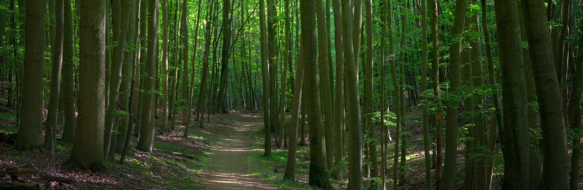 Am Salemer Moor befindet sich ein dichter naturnaher Wald., © Alex K. Media / HLMS GmbH