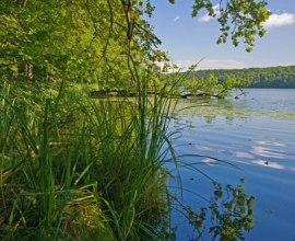 Am Lütauer See bei Mölln im Naturpark Lauenburgische Seen., © Thomas Ebelt HLMS GmbH