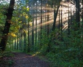 Lichtspiel auf einem Wanderweg im Wald, © Thomas Ebelt, HLMS GmbH