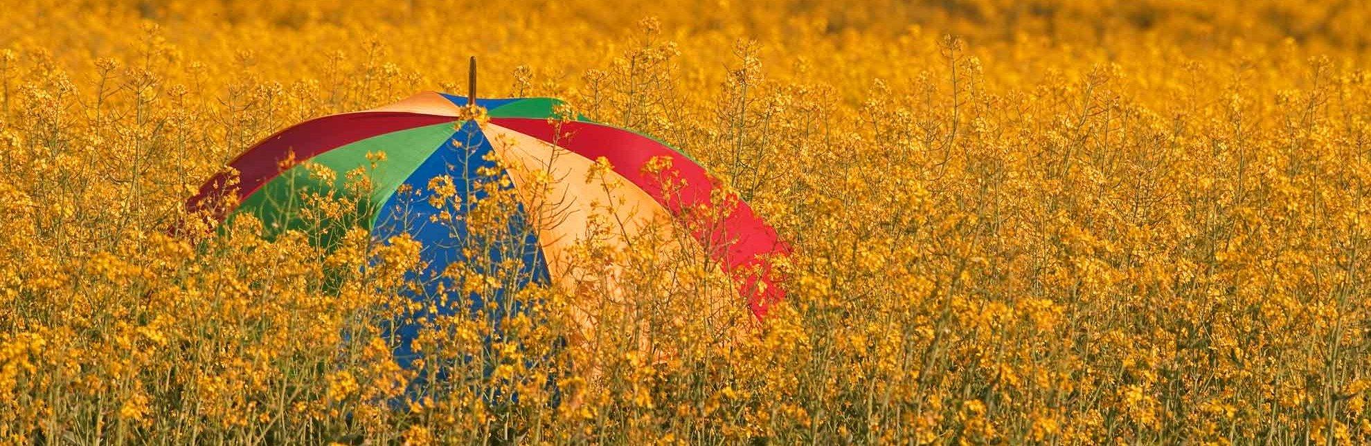 Rapsfeld mit Schirm, © Ebelt/HLMS