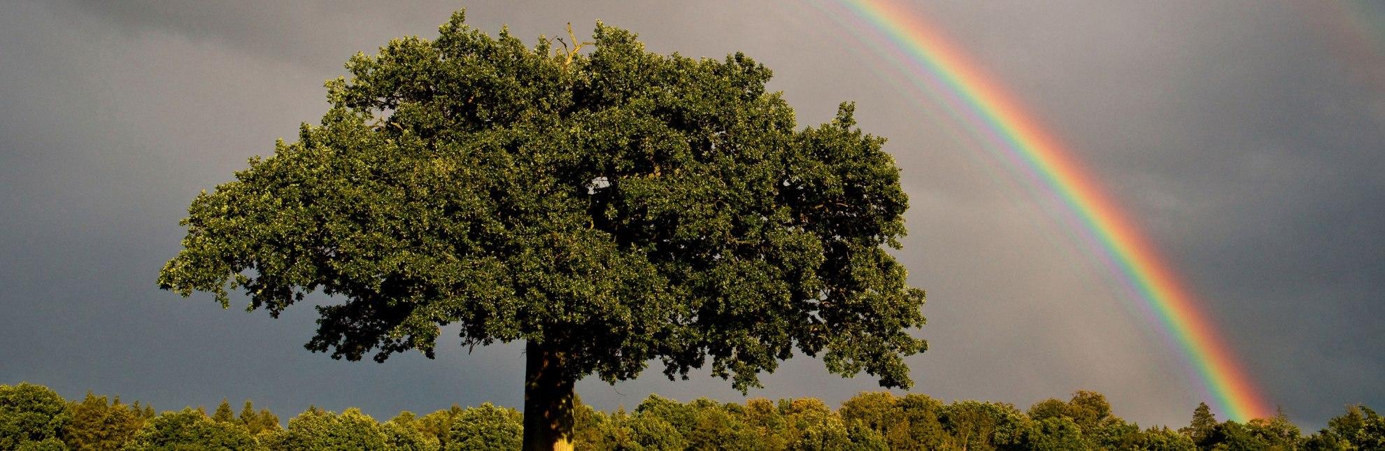 Herbstlicher Lichtzauber im ländlichen Herzogtum Lauenburg, © Thomas Ebelt / HLMS GmbH
