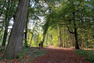 Wanderweg am Garrensee, © Elke Tampe